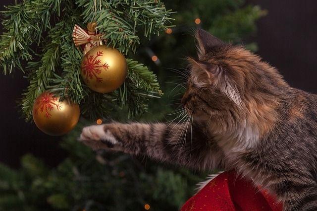 Тюменцы открыли сезон писем  Деду Морозу