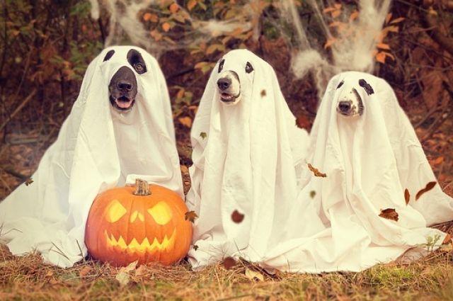 Подходящий вариант празднования Хэллоуина для себя смогут найти киноманы, творческие натуры и даже любители собак.