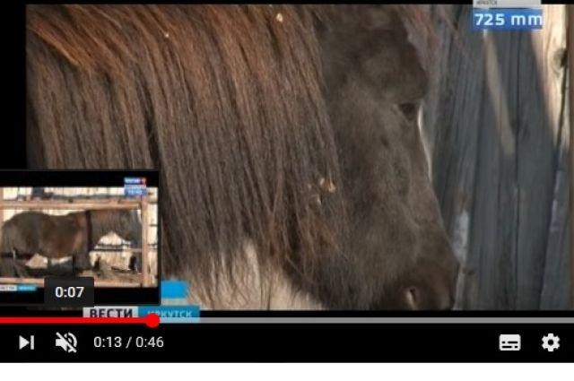 Стая бродячих собак растерзала пони вАнгарске