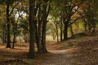 Если участок расположен в лесу, всё равно его можно оформить в собственность.