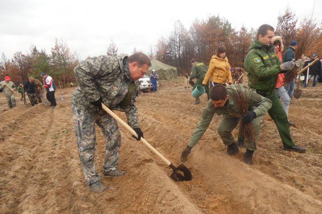 Первый замгубернатора области Виктор Гончаров сажает лес.
