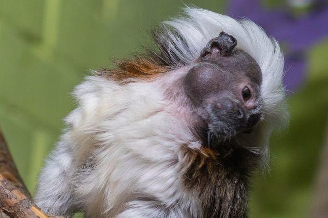 На голове у Эйнштейна копна длинных белых волос.