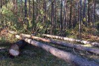 Выявлено 12 незаконных рубок в Иркутском районе.
