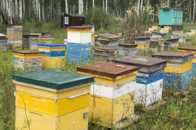 Вблизи Янаула мужчина похитил улей икостюм пчеловода— Ограбление по-башкирски