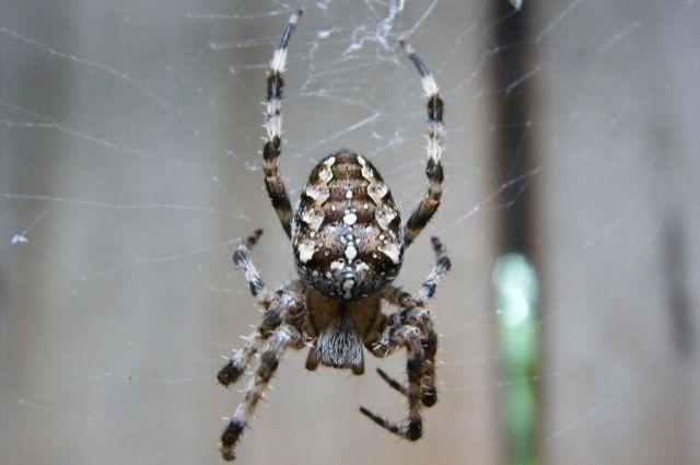 Посетители выставки познакомятся с представителями паукообразных из разных стран мира.