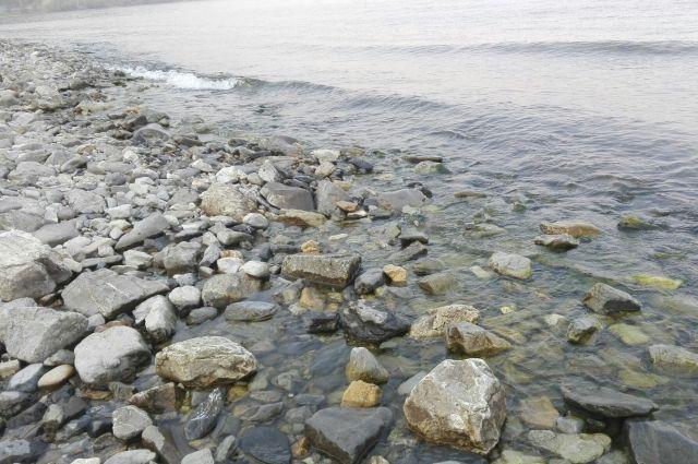 Трупы животных нашли на берегу Байкала.
