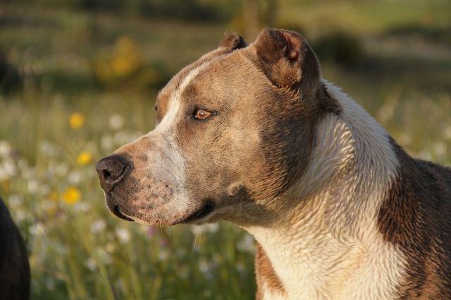 ВПетербурге собачка покличке Тея будет новым сотрудником «Технологического института»