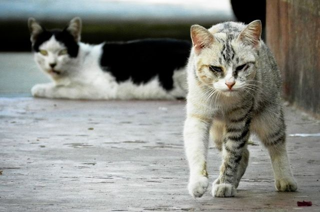 Тюменка завела в квартире 17 кошек: теперь животные ей не нужны