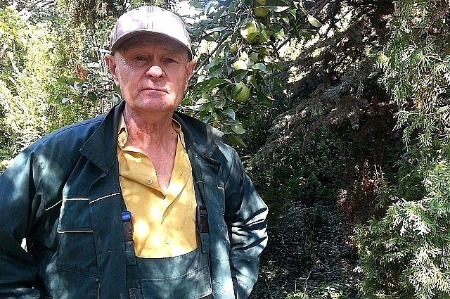 Мечта виктора кузнецова сбылась через 40 лет после посадки в огороде первого хвойного дерева.