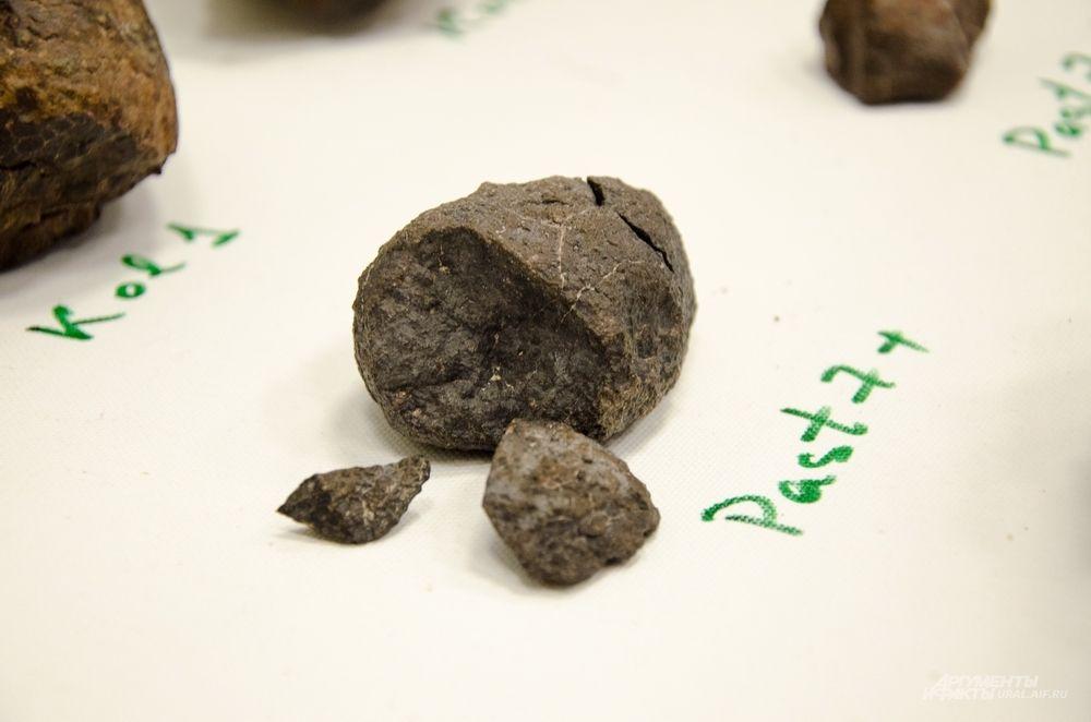 Самый крупный из метеоритов был найден в первый же день весом 13,5 кг. Но это не он.