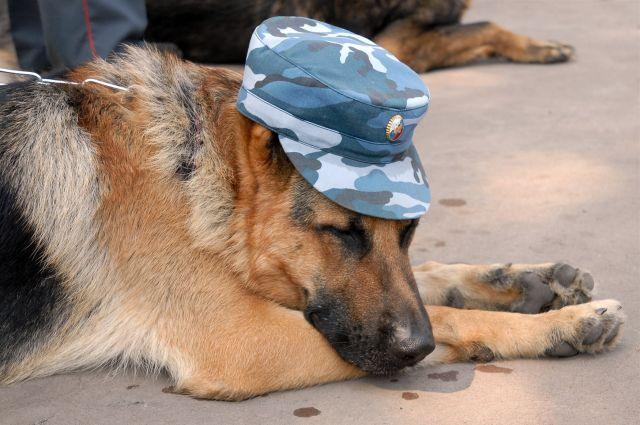 В Тюмени выращивают чистокровных служебных собак