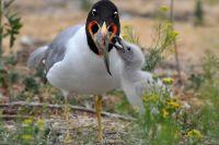 Александр Липкович: радует, что сейчас растёт численность птиц.