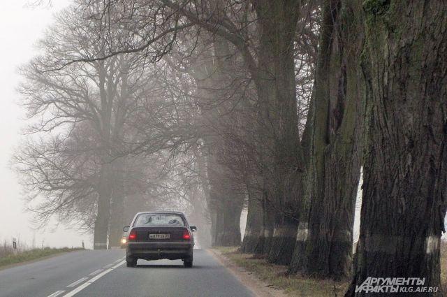 Натрассе под Зеленоградском погибла пассажирка врезавшегося вдерево авто