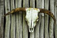 В Прокопьевском районе Кемеровской области нашли незаконные скотомогильники.
