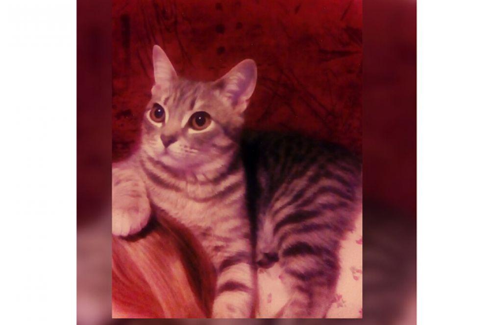 Баха. Баха - самый милый, любопытный и веселый кот. Он обладает своеобразным характером и предпочтениями в еде. Например, равнодушен к сметане и молоку, но просто обожает оливки, сырые помидоры и кабачки. Иногда мне кажется, что он с другой планеты, но этот вредный инопланетянин делает каждый мой день чуточку лучше!