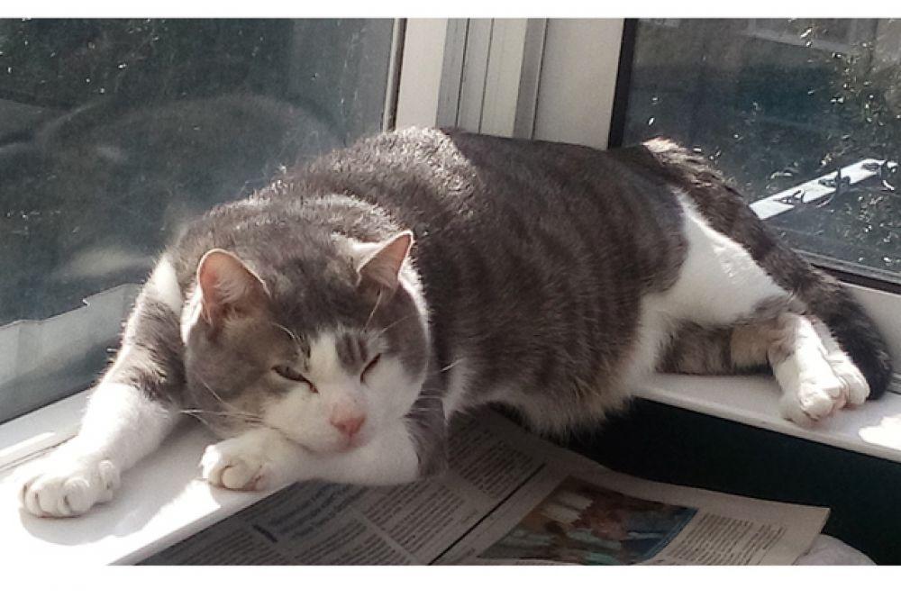 Костик. Котику 2 года назад был просто дворовым котом. Теперь это любимый член семьи.