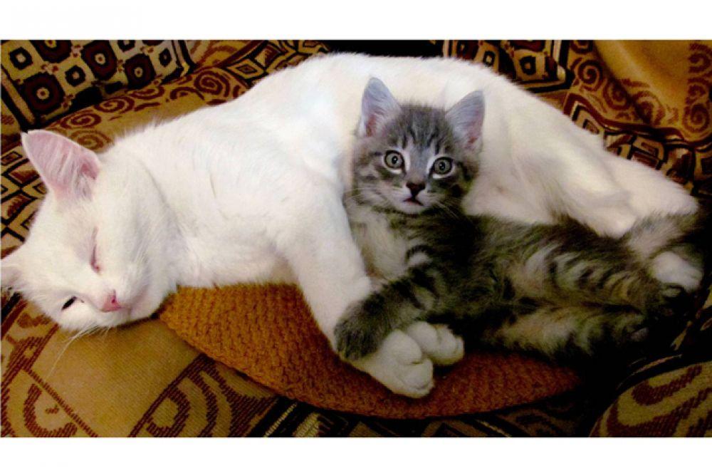 Серенький с мамой.