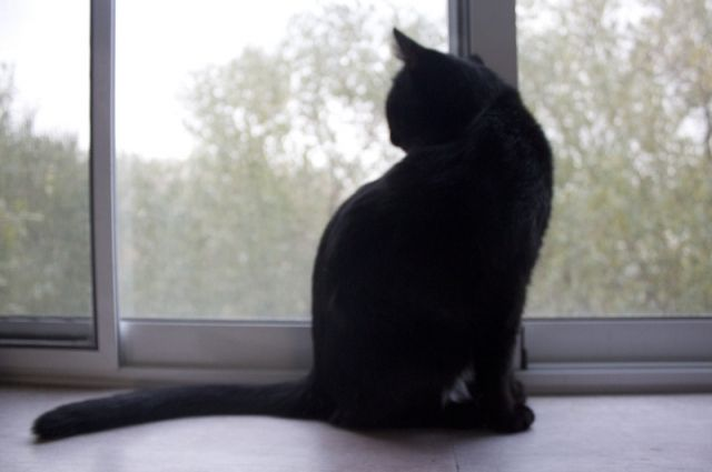 Заражение грозит даже тем животным, которые не покидают квартиру.