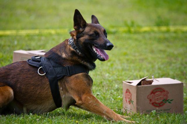 ВДомодедово обучают служебных собак различать рубли иевро позапаху