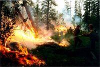 Лесные пожары – настоящее бедствие для тайги.