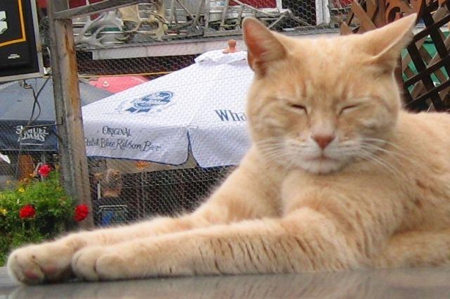 ВТюмени пожарные спасли просидевшего надереве три дня кота