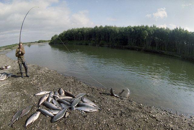 Река Большая, 90-е годы. Кижуч идёт.
