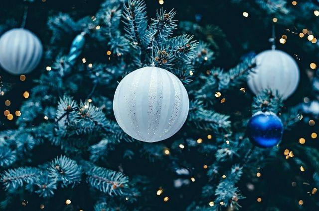 Главную новогоднюю ель для Барнаула привезли из столицы 2-мя фурами