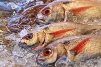 Рыбу будут продавать на льготным ценам.