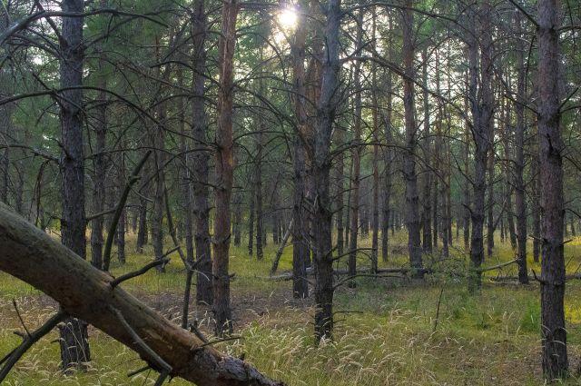 Мужчина под надуманным предлогом заманил приятеля в лес.