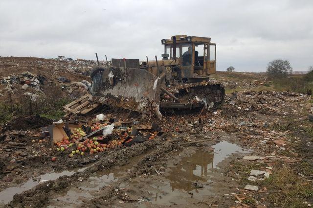 Всего была уничтожено 407 кг яблок.