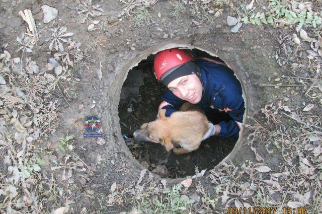 Новосибирские cотрудники экстренных служб вызволили угодившего вколодец пса