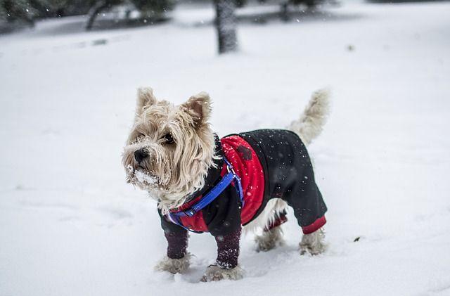 Одежда не только греет, но и защищает собак от грязи