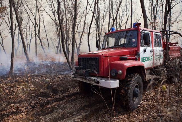 ВПриморье засутки потушено 500 гектаров горящих лесов