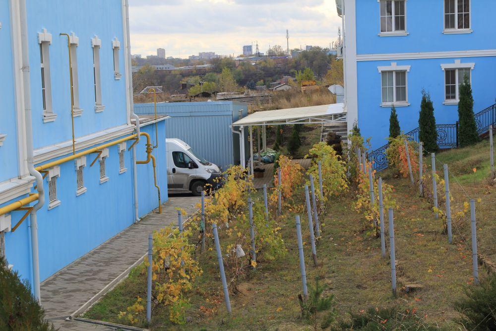 Испокон веков в монастырях выращивали свой виноград, из которого делали вино, в дальнейшем используя его на причастие.