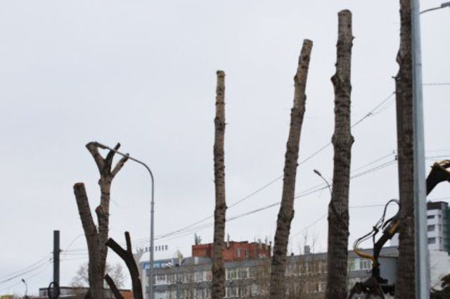 В Тюмени за нарушение технологии обрезки деревьев накажут подрядчиков