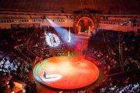 В Киеве запретили цирки-шапито с животными