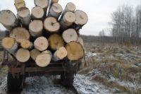 В Кузбассе задержали «Черных лесорубов» из Томской области.