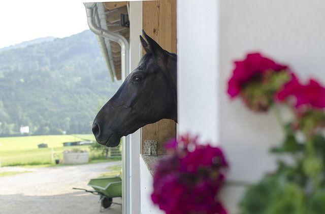 Молодые люди украли лошадь и жеребца.