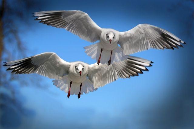 Облпрокуратура: доступ ксайтам попродаже краснокнижных птиц заблокирован