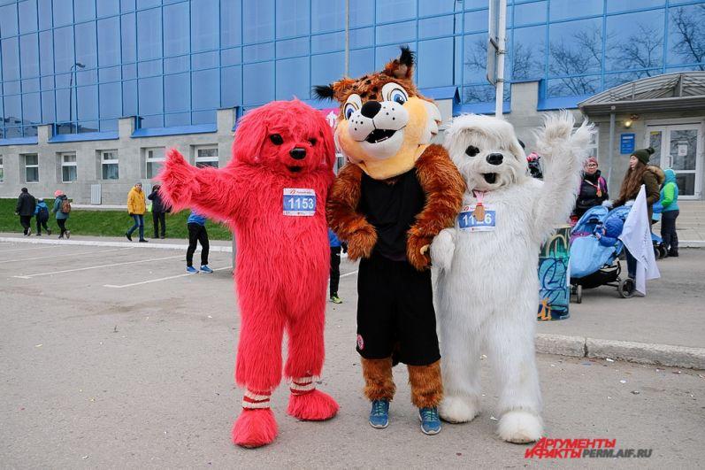 Рысь из «Пармы» и весёлые собачки из «АиФ-Прикамье» стали лучшими друзьями.