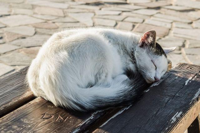 Гражданин Поморья подвесил кошку наэлектрическом проводе идобил ножом