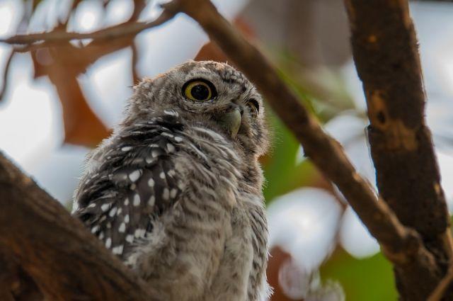 Раненые птицы попадают к тюменскому орнетологу примерно раз в месяц