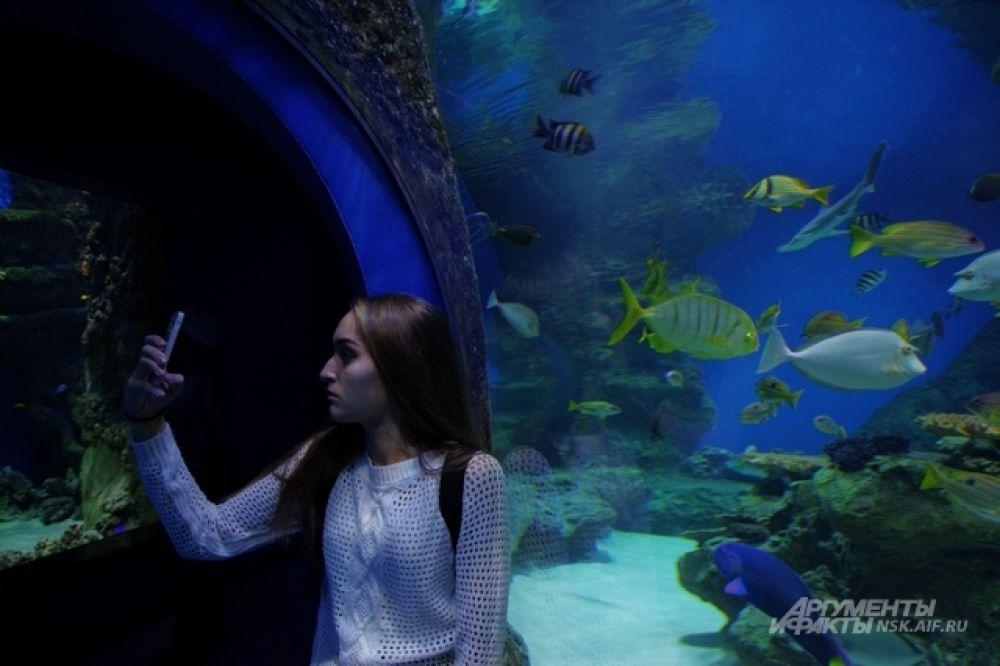 Кто знает, как повернется жизнь юной посетительницы океанариума? Может быть, она станет океанографом или морским биологом и посвятит свою жизнь изучению столь необъятной стихии, как океан.