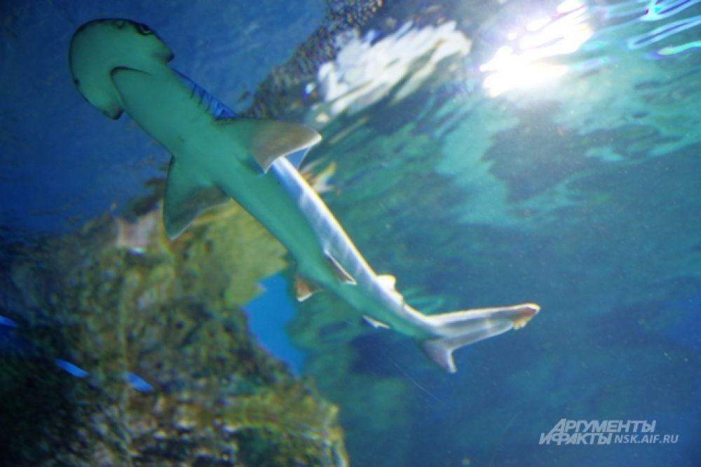 Морская флора и фауна - лучшее лекарство от стресса и негатива повседневной жизни.  Акула на расстоянии вытянутой руки!