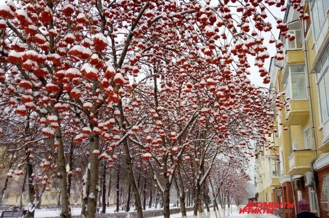 В Прикамье ожидается сильный ветер с порывами до 15-20 м/с.