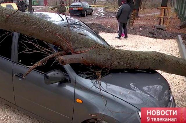 ВРязани из-за уличных работ дерево расплющило автомобиль