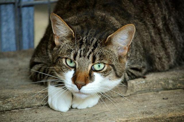 Заболеванию подвержены собаки и кошки.