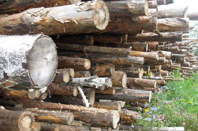Экологи призывают  полностью запретить вывоз леса «кругляка» из России в Китай.