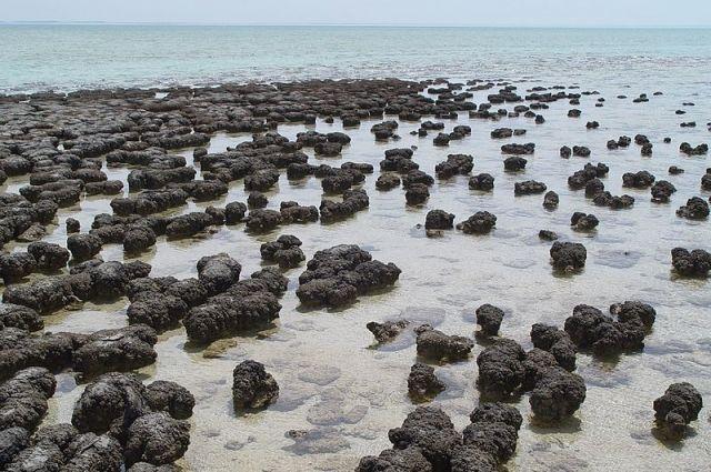 На острове Тасмания обнаружили древнейшую форму жизни - Real estate
