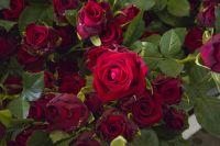Если вы до сих пор не укрыли розы, сделать это надо в ближайшее время.